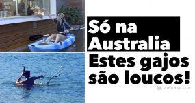 SÓ NA AUSTRALIA: Estes gajos são loucos!