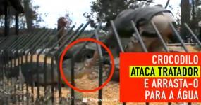 WOW: Tratador Atacado e Arrastado por Crocodilo no Zoo