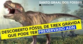 Fóssil de T-Rex grávida pode ter preservado ADN dos dinossauros