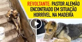 REVOLTANTE: Estado em que Cão foi Encontrado na Madeira