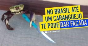 No Brasil até um Caranguejo te Pode Esfaquear