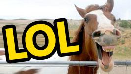 Cavalo 1 – 0 Jornalista