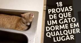 18 Provas de que um Gato Dorme em Qualquer Lugar