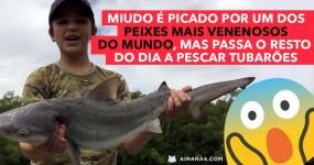 Puto é Picado por Peixe Extremamente Venenoso e Depois Vai Pescar Tubarões