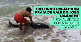 Nadador Salvador Ajuda Golfinho em Vale do Lobo (Algarve)