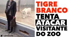 Tigre Branco tenta ATACAR VISITANTE no Zoo