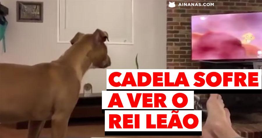 Cadela EMOCIONA-SE a ver REI LEÃO