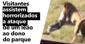 Visitantes assitem HORRORIZADOS a ataque de leão ao dono de parque