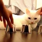 Gato é Profissional no Jogo dos Copos