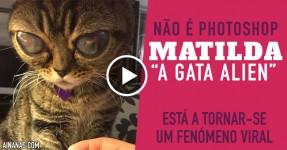 """MATILDA: """"Gata Extraterrestre"""" faz Furor na Internet"""