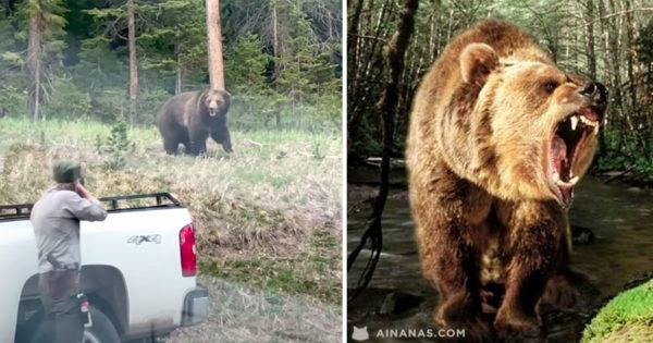 YIKES! Urso aproxima-se de forma ameaçadora de um Ranger