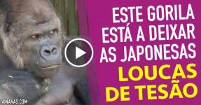 Um Gorila está a Deixar as Japonesas Loucas de Tesão